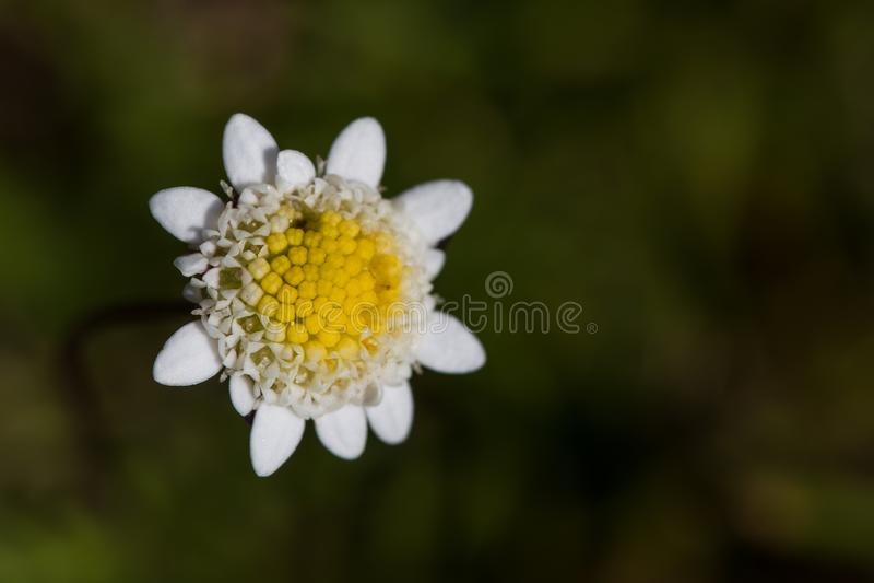 Makro der Blume mit kleinen Insekten stockfotos