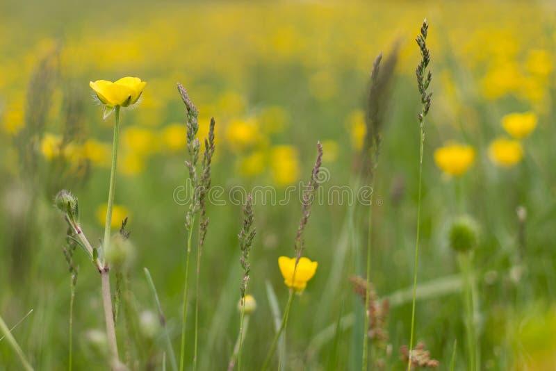 Makro der gelben Blume auf dem Gebiet stockfotos