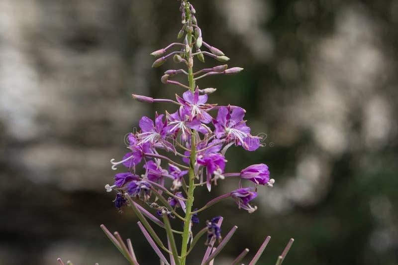 Makro der purpurroten Blume stockfotos