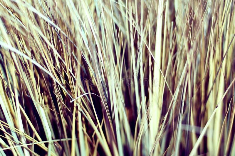 Makro des getrockneten Grases, Weinleseblick stockbilder