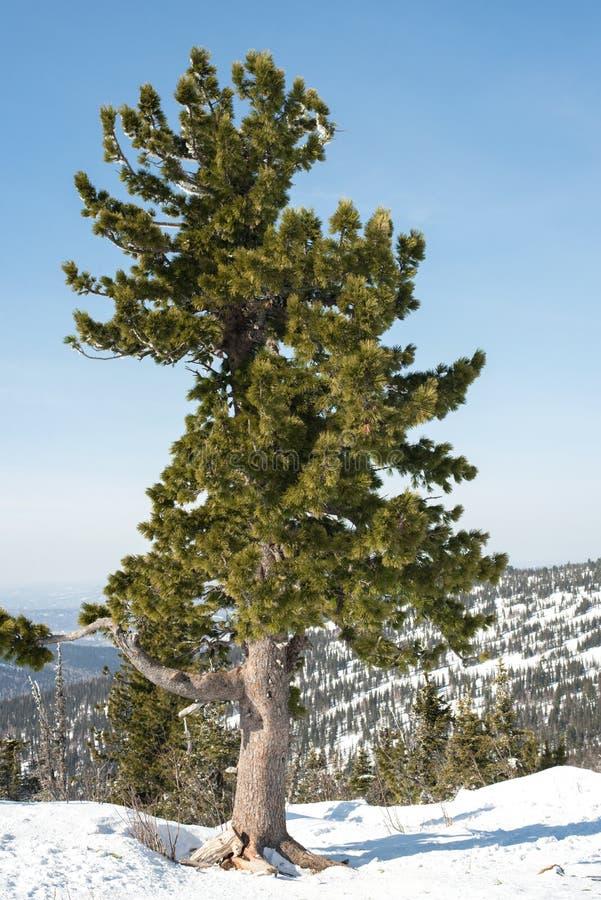 Makro des grünen Grases Die Landschaft des Gebirgsmassivs im Frühjahr im guten Wetter lizenzfreie stockfotografie