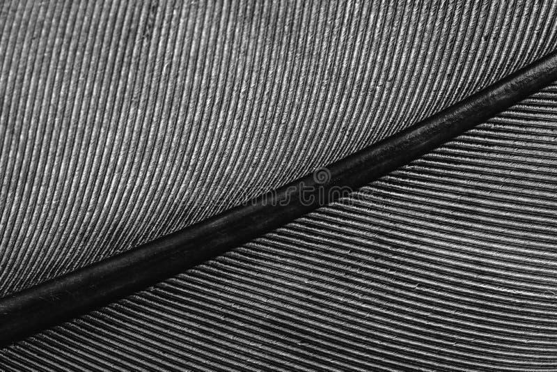 Makro einer Feder, Linien auf der Feder lizenzfreie stockfotos