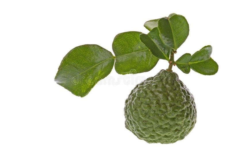 makro för kaffirleaveslimefrukt arkivbilder