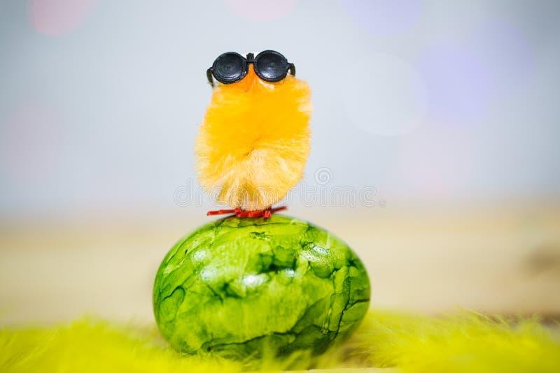 Makro för påskägg, på gula fjädrar, fågelunge royaltyfria foton