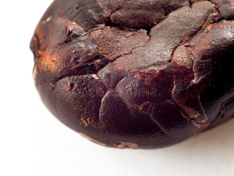 Makro f?r kakaob?na arkivbilder