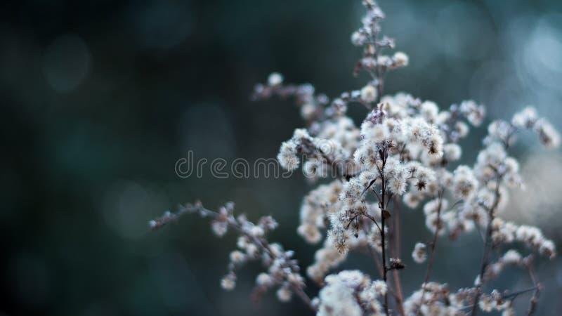 Makro- fotografia biali kwiaty zdjęcia royalty free