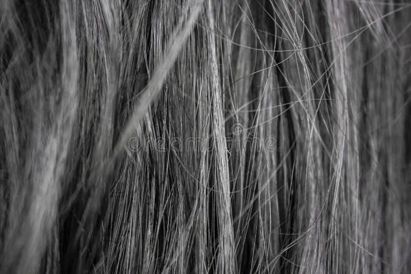 Makro- fotografia kobiet ciemni hairs fotografia royalty free