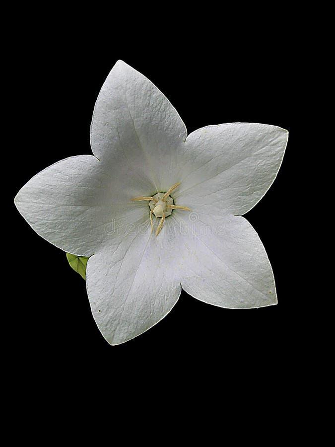 Makro- fotografia z dekoracyjną tło geometrią unikalna struktura naturalny kwiat zdjęcie stock