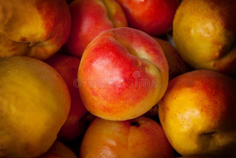 Makro- fotografii tropikalnej owoc karmowa morela Tekstury tło żółte dojrzałe morele zdjęcie stock