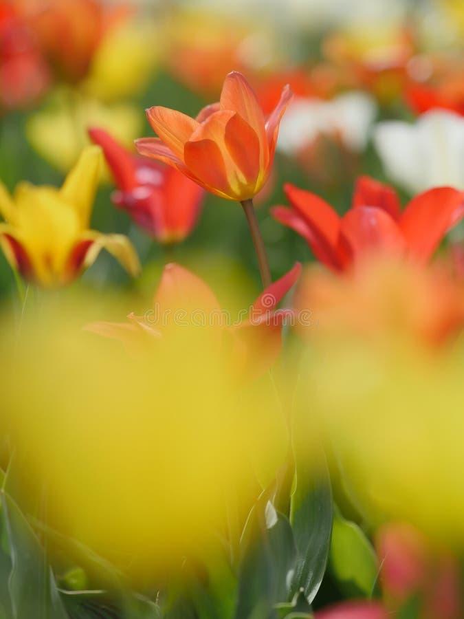 Makro- jaskrawi kwiaty zdjęcie royalty free