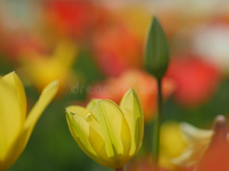 Makro- jaskrawi kwiaty obraz stock