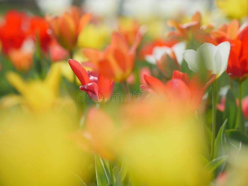 Makro- jaskrawi kwiaty zdjęcia royalty free