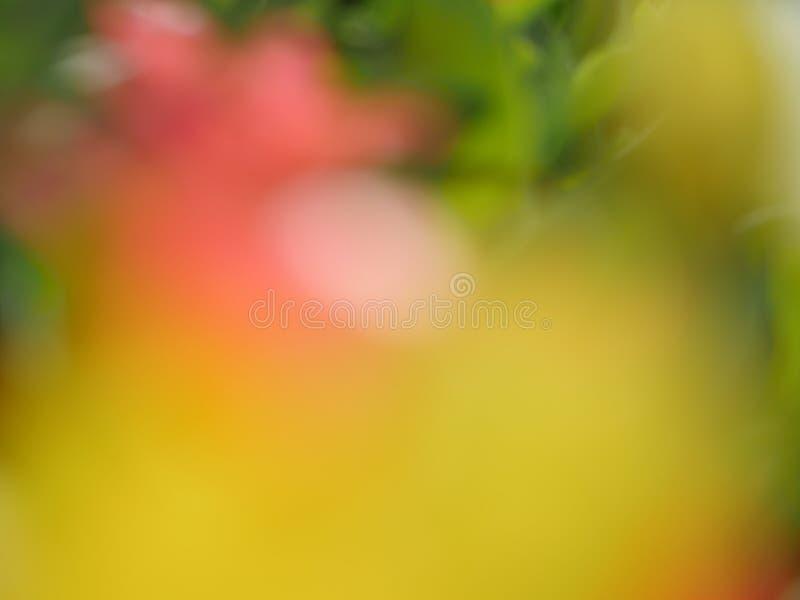 Makro- jaskrawi kwiaty fotografia stock