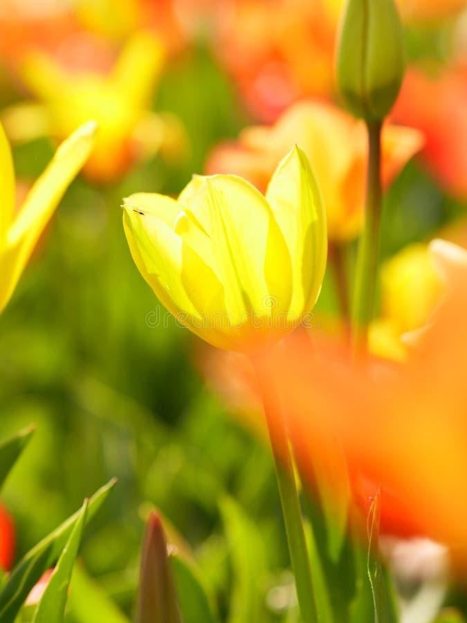Makro- jaskrawi kwiaty zdjęcia stock
