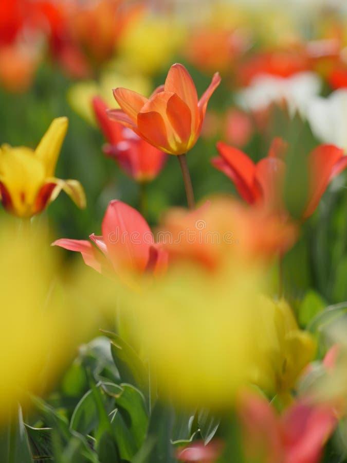 Makro- jaskrawi kwiaty obrazy royalty free