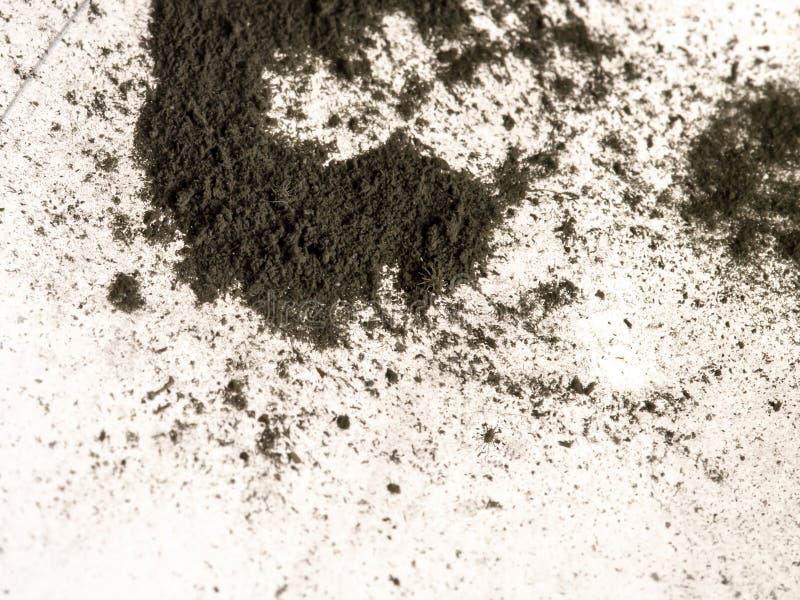 Makro- kilka malutkie Domowe pył lądzieniec, ledwo widoczny nagi oko obraz royalty free