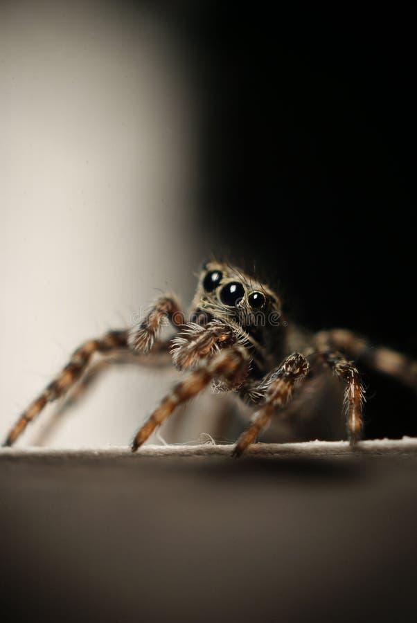 Makro kleine Spinne des kleinen Käfers stockbilder