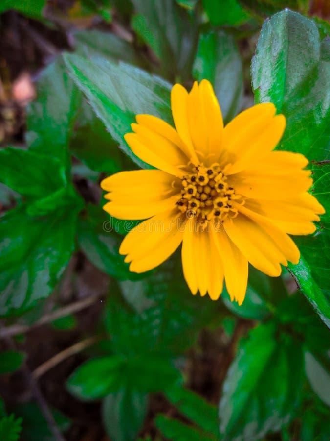 Makro- kolor żółty obrazy stock