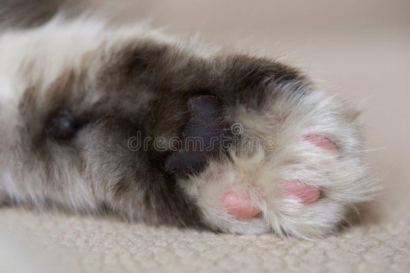 Makro- kot palmy łapa zdjęcie stock
