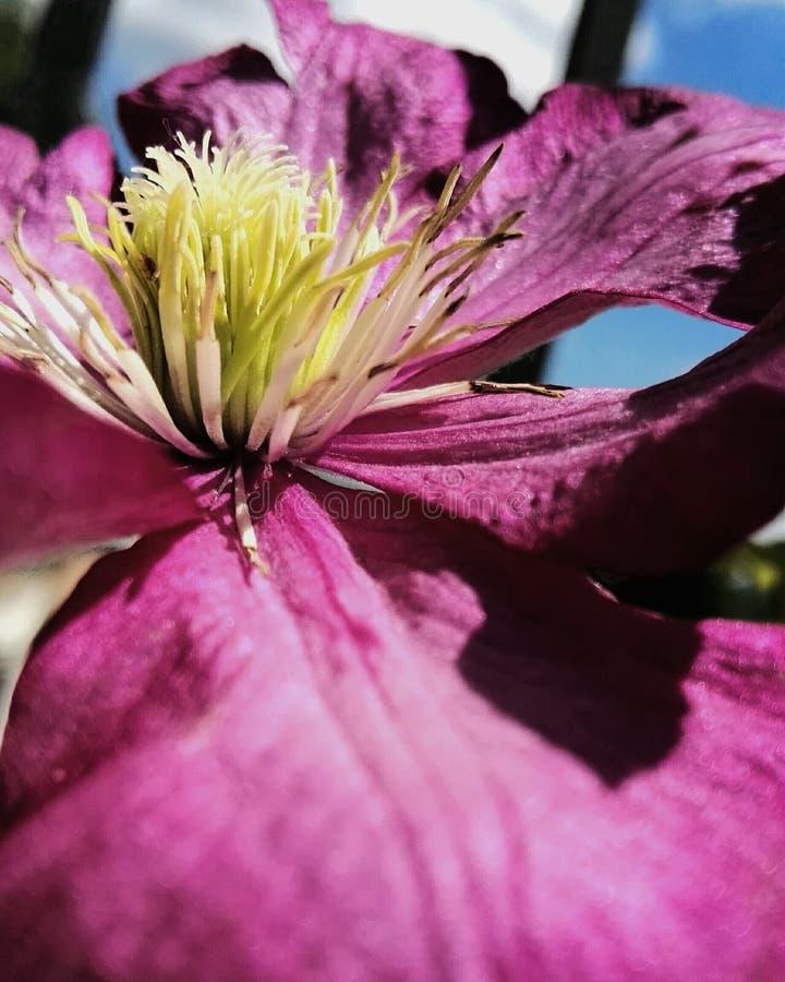 Makro- kwiat obraz royalty free