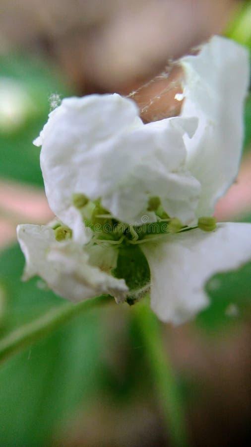 Makro- kwiaty fotografia stock
