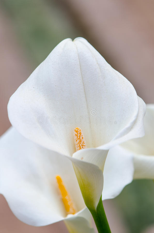 Makro- kwiaty III zdjęcie stock