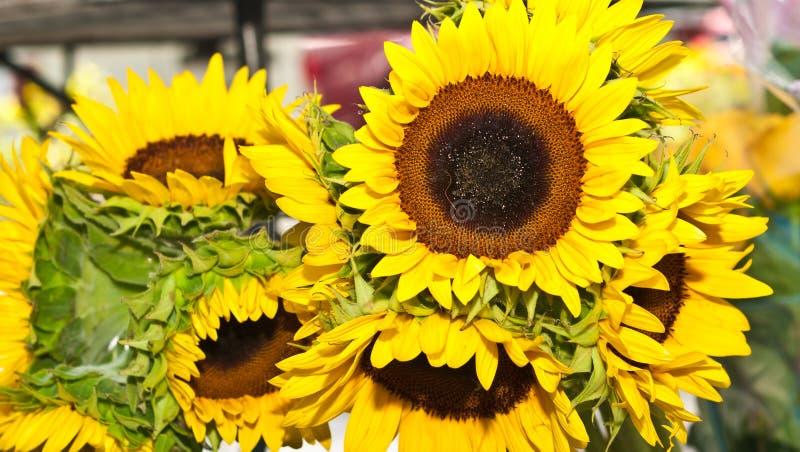 Makro- kwitnący słoneczniki, przy tropikalnymi rolnikami wprowadzać na rynek zdjęcia stock