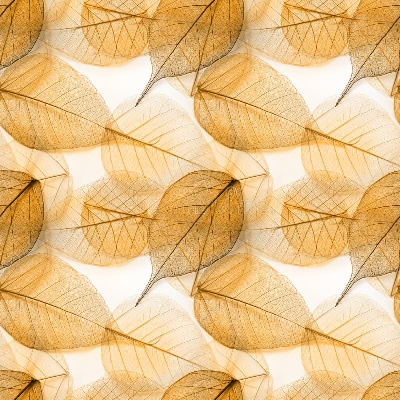 Makro- liści bezszwowa tekstura obrazy stock