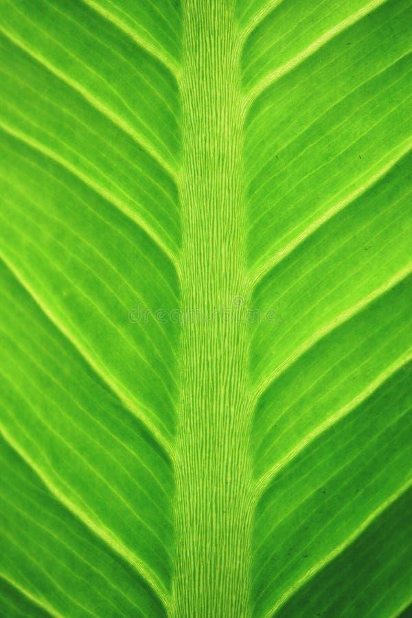 Makro- liścia tła tekstura fotografia royalty free