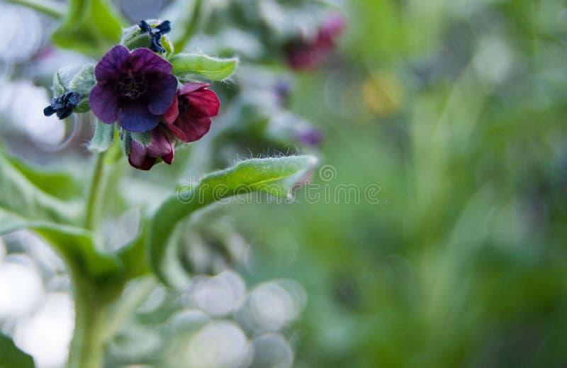 Makro- mali zmrok kwiaty obrazy royalty free