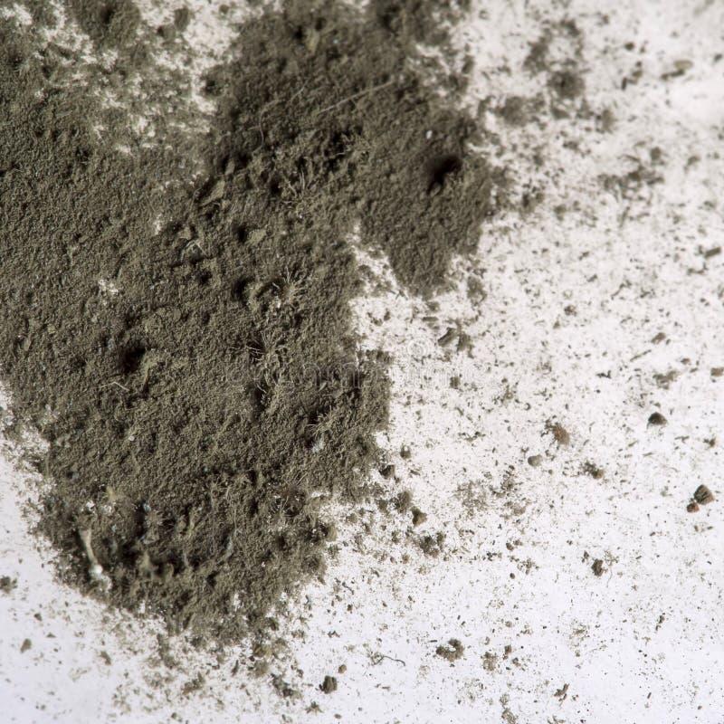 Makro- malutkie Domowe pył lądzieniec, ledwo widoczny nagi oko zdjęcia stock