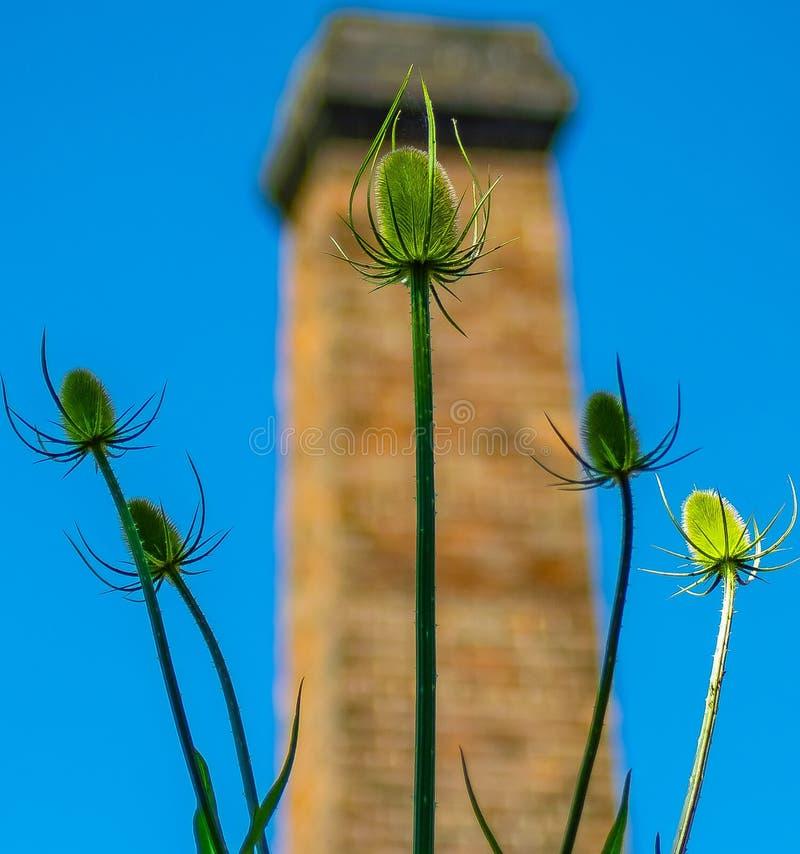 Makro- odosobniony lato rośliny ostrze wyszczególniający zdjęcie stock