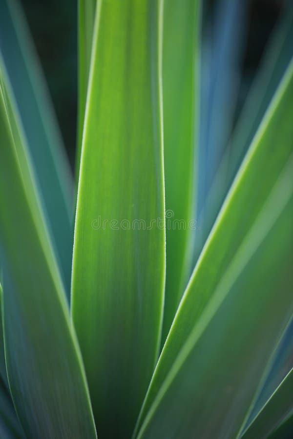 makro- palma obraz stock