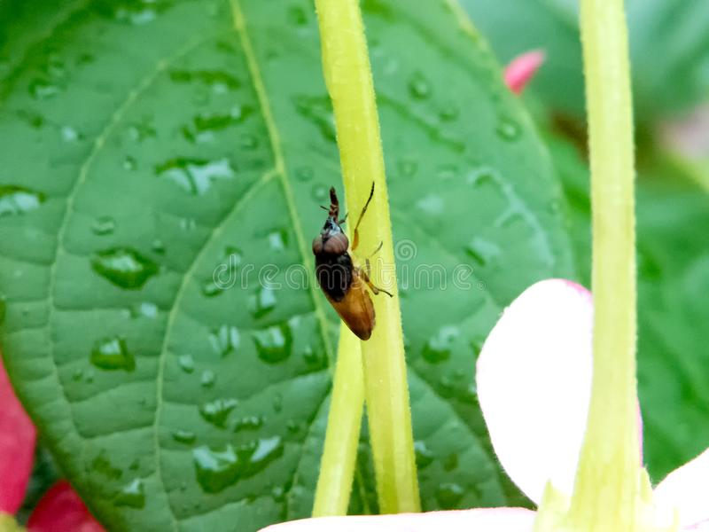 Makro- pluskwa na ogrodowej roślinie zdjęcie royalty free