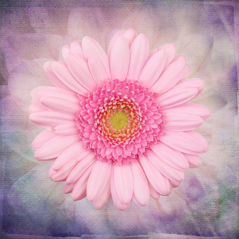 Makro rosa Blume auf der Kunstweinlesetapete stock abbildung
