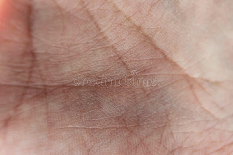 Makro- skóra palma z liniami życie i widoczni naczynia krwionośne Kreskowa formacja zdjęcie stock