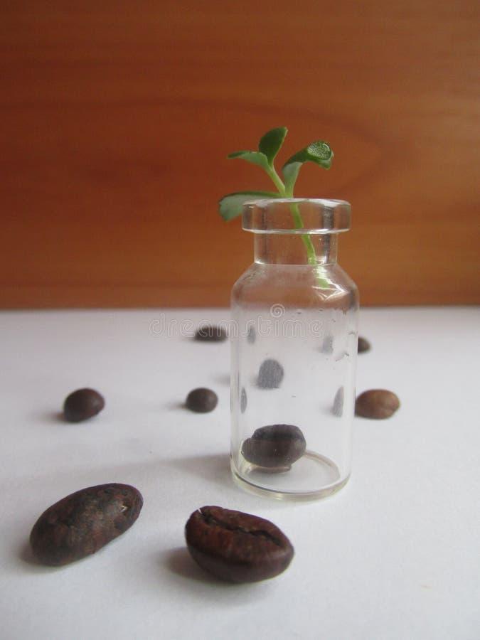 Makro- skład z pustym szklanym zbiornikiem i kawowymi fasolami zdjęcie royalty free