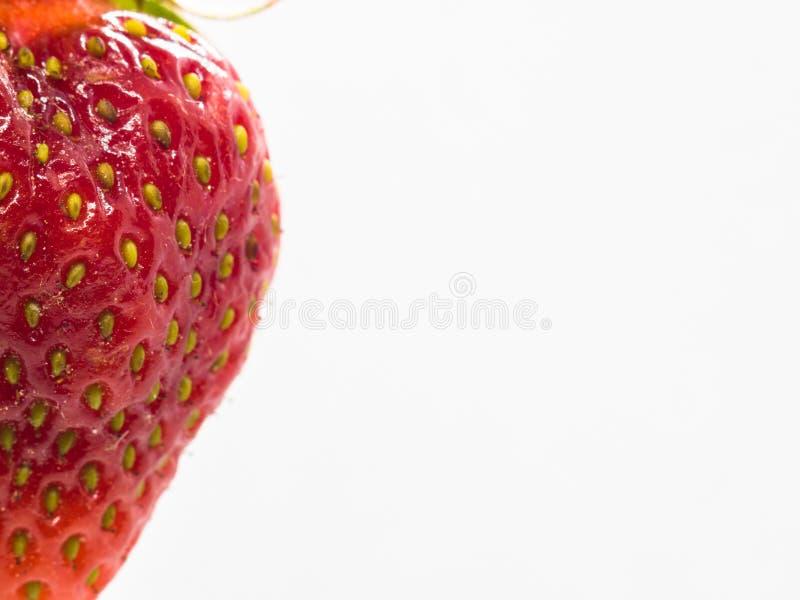 Makro som skjutas av den röda jordgubben på vit bakgrund med utrymme för text- eller kopieringsutrymme arkivfoto