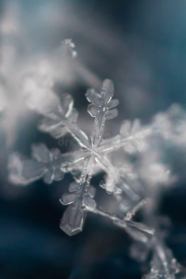 Makro som skjutas av djupfryst snöflinga 2 royaltyfri bild