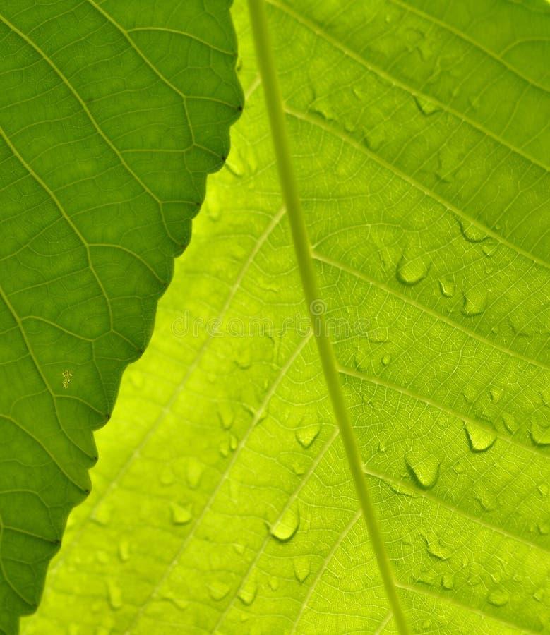 Makro- strzał liście Zielenieje w naturze zdjęcie stock