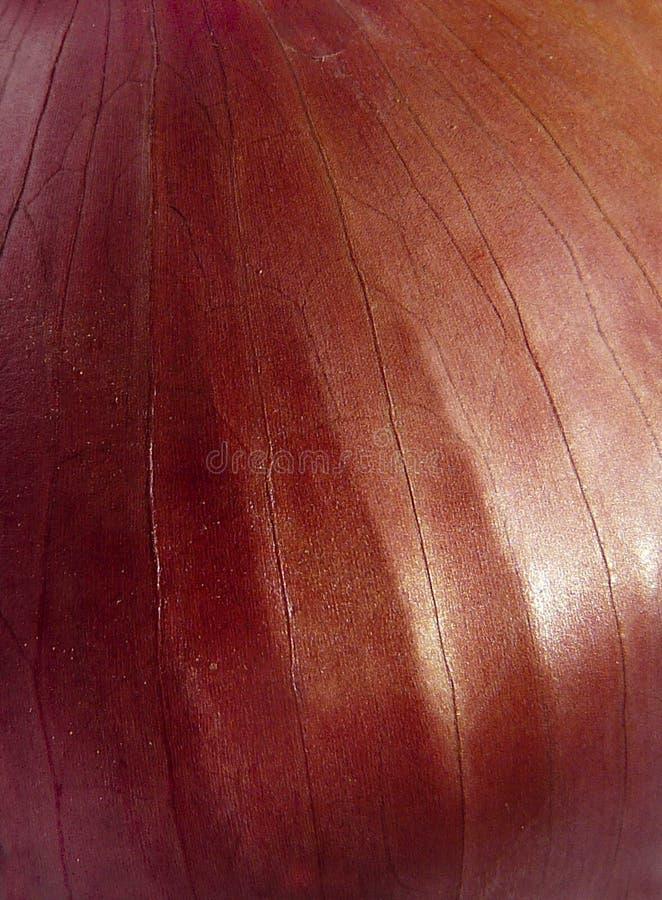 Makro- szczegół fiołkowa i miękka skóra cebula obrazy royalty free
