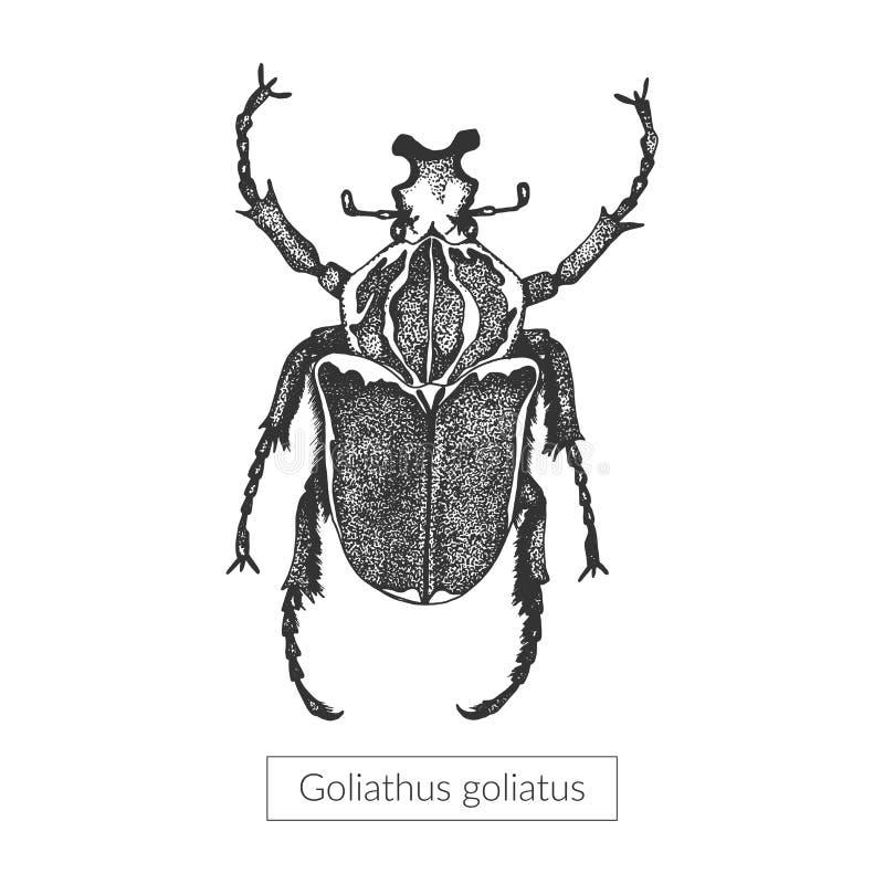 Makro- szczegółowy rysujący insekt ilustracji