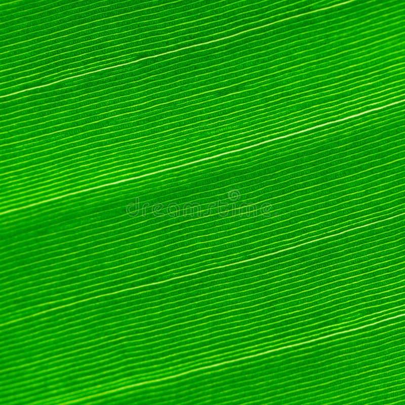 Tło zielony liść zdjęcia royalty free