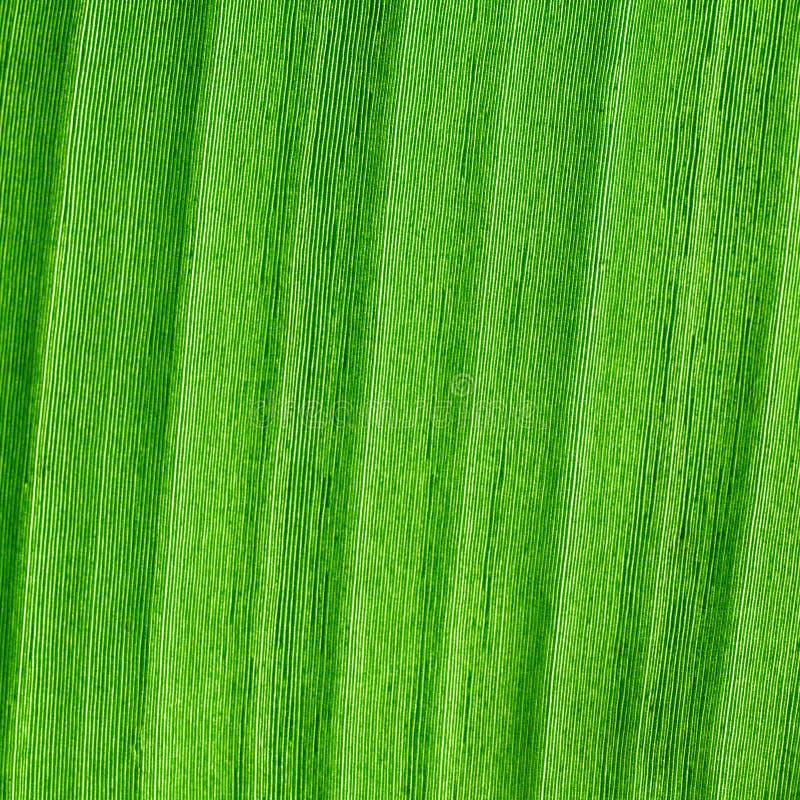Tło zielony liść zdjęcia stock