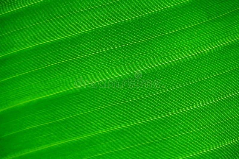 Tło zielony liść obrazy stock