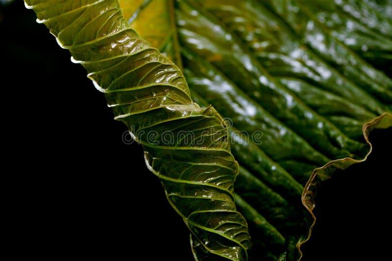 Tło zielony liść obraz stock