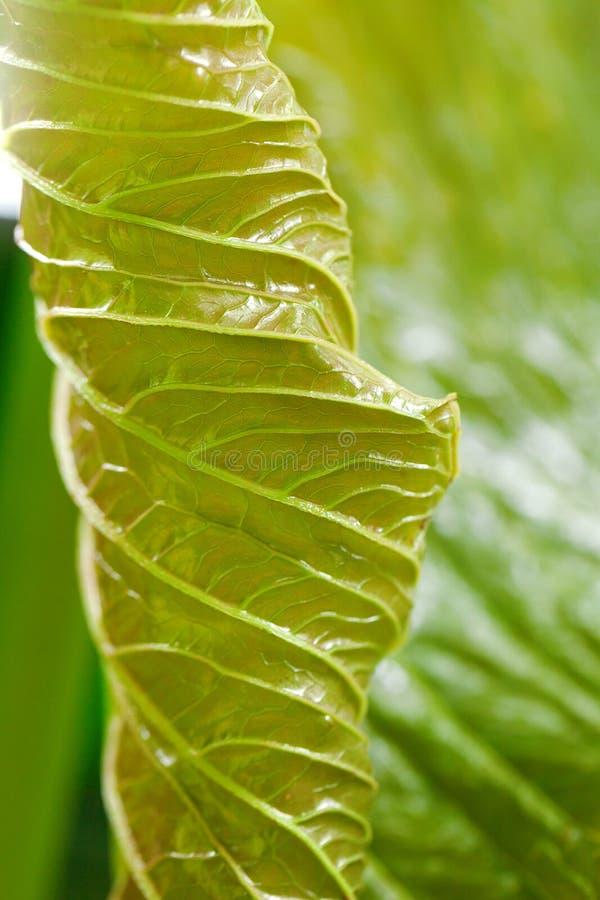 Tło zielony liść zdjęcie stock