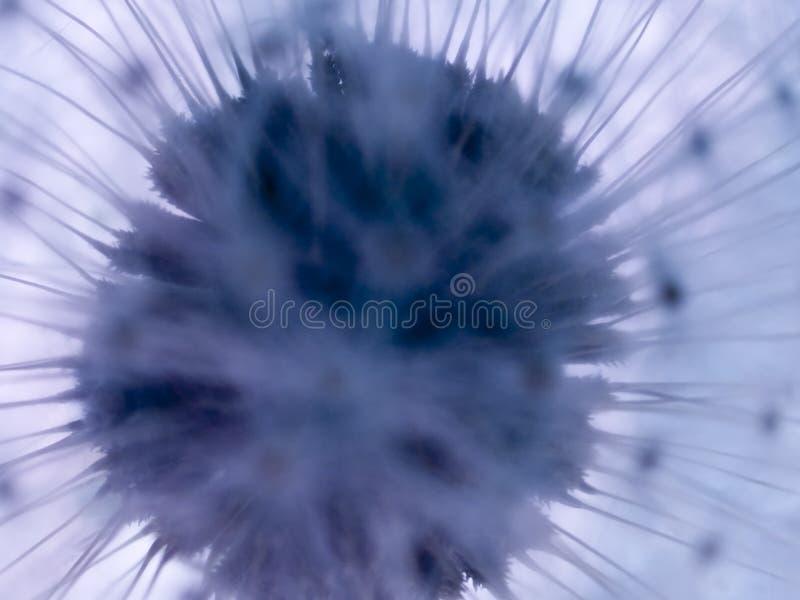 Download Makro- Tekstura Dandelion - Rośliny - Obraz Stock - Obraz: 610087