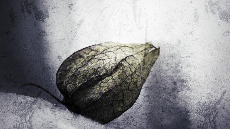 Makro von gefrorenen Physalis auf kalten Ton, schöne glühende gefrorene Physalis auf dem Gefrierschrank, Grunge abstrakter Stil lizenzfreie abbildung