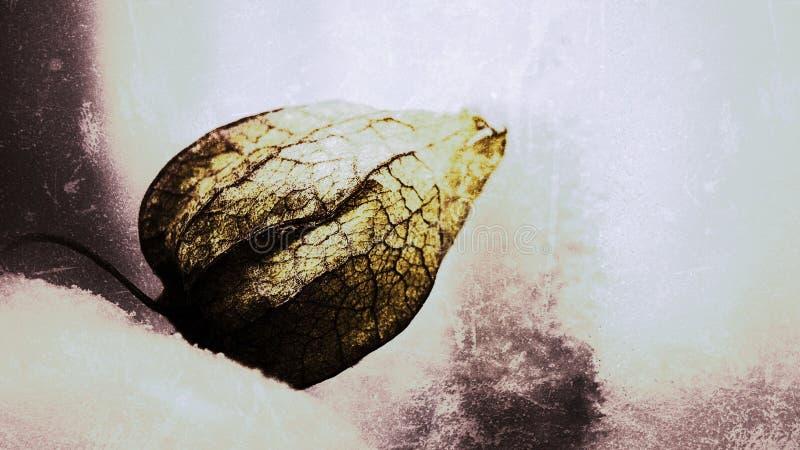 Makro von gefrorenen Physalis auf kalten Ton, schöne glühende gefrorene Physalis auf dem Gefrierschrank, Grunge abstrakter Stil stock abbildung